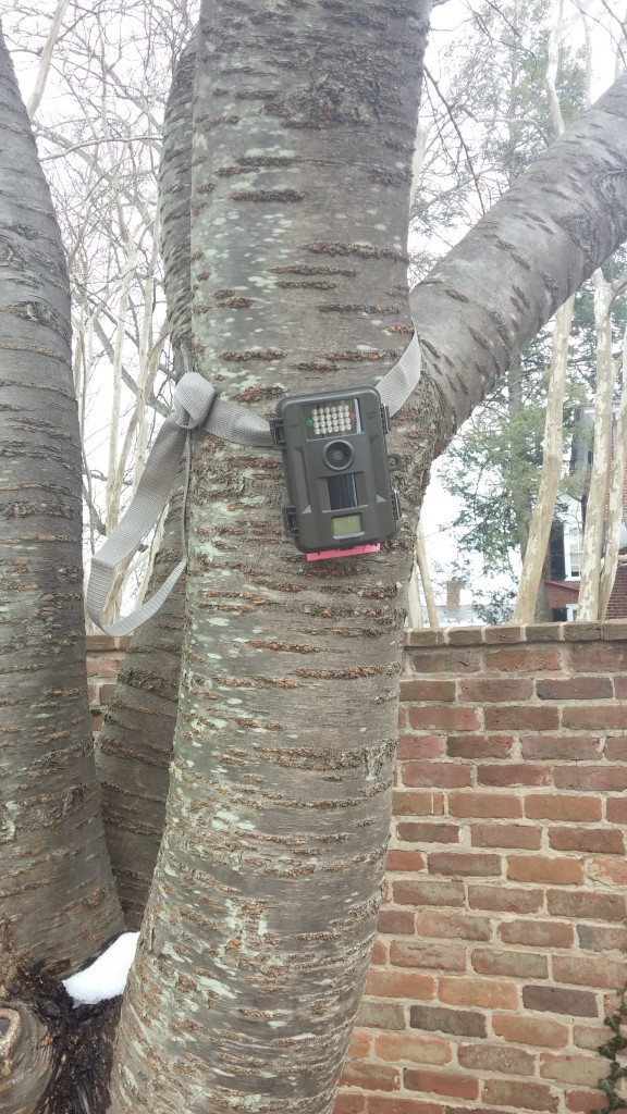 Camera strapped to a tree located in one of the gardens behind the lawn.