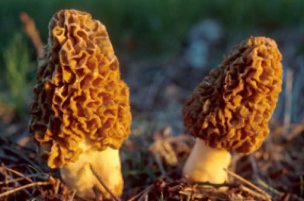 fungi2-2