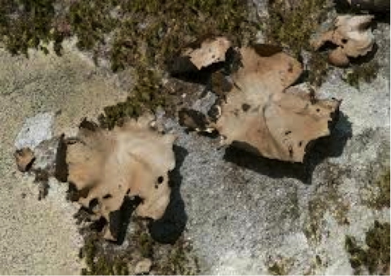 fungi2-4