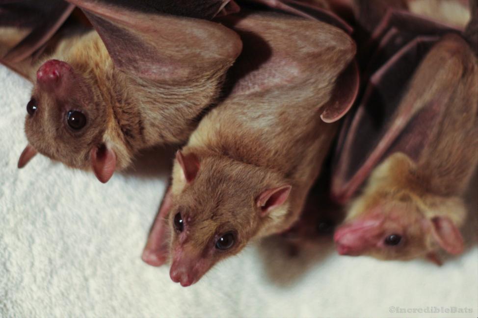 bats2-1