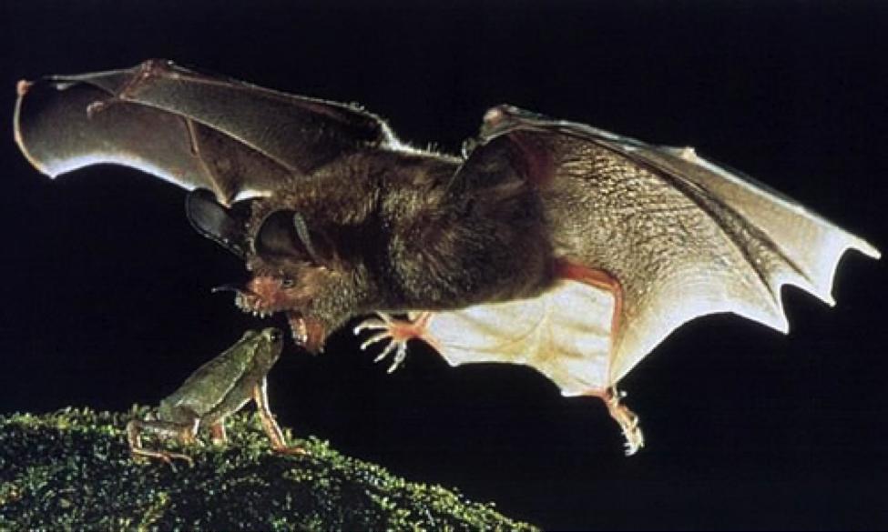 bats2-2