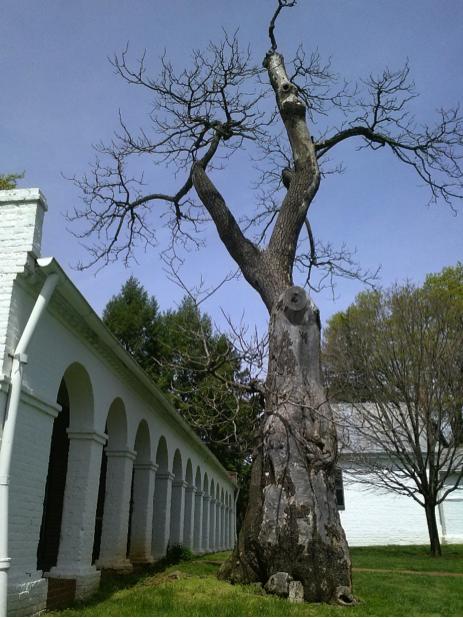 trees4-2