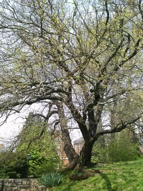 trees4-3
