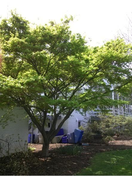 trees4-4