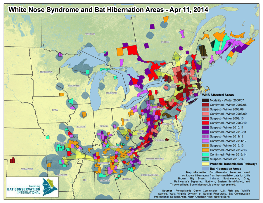 Photo from: Bat Conservation International.