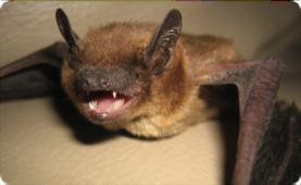 bats5-3