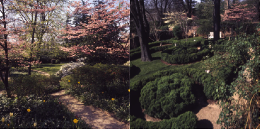 Whereas Pavilion III (left) has abundant dogwood trees and azaleas, Pavilion V (right) is much more formal with dwarf boxwood. Photos from: Virginia Historical Society.