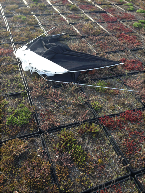 The collapsed Malaise trap found on top of Rouss- Robertson after a windy night.